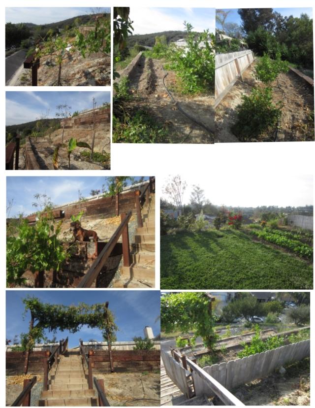 Davis Garden