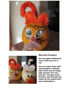 what bird pumpkin