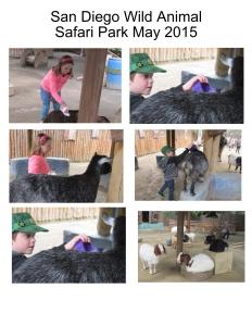 SD Animal Park3