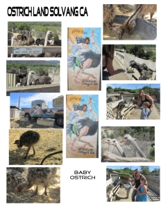 Ostrich Land Solvang CA