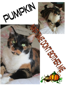 Pumpkin the Halloween Cat
