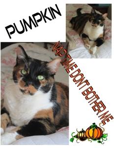 Pumpkin the Halloween Cat