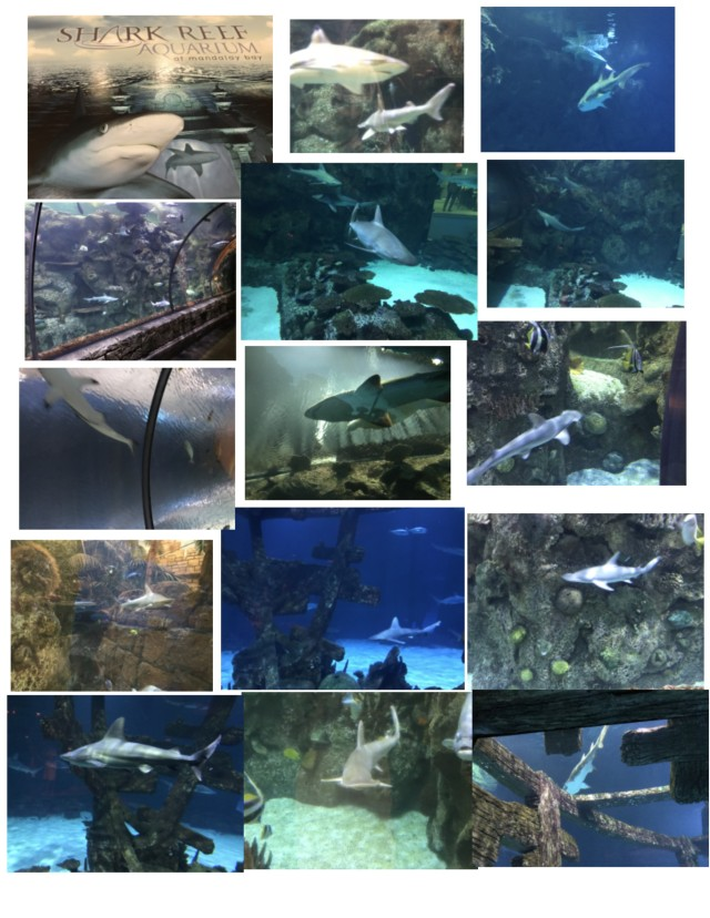 lv shark aquarium